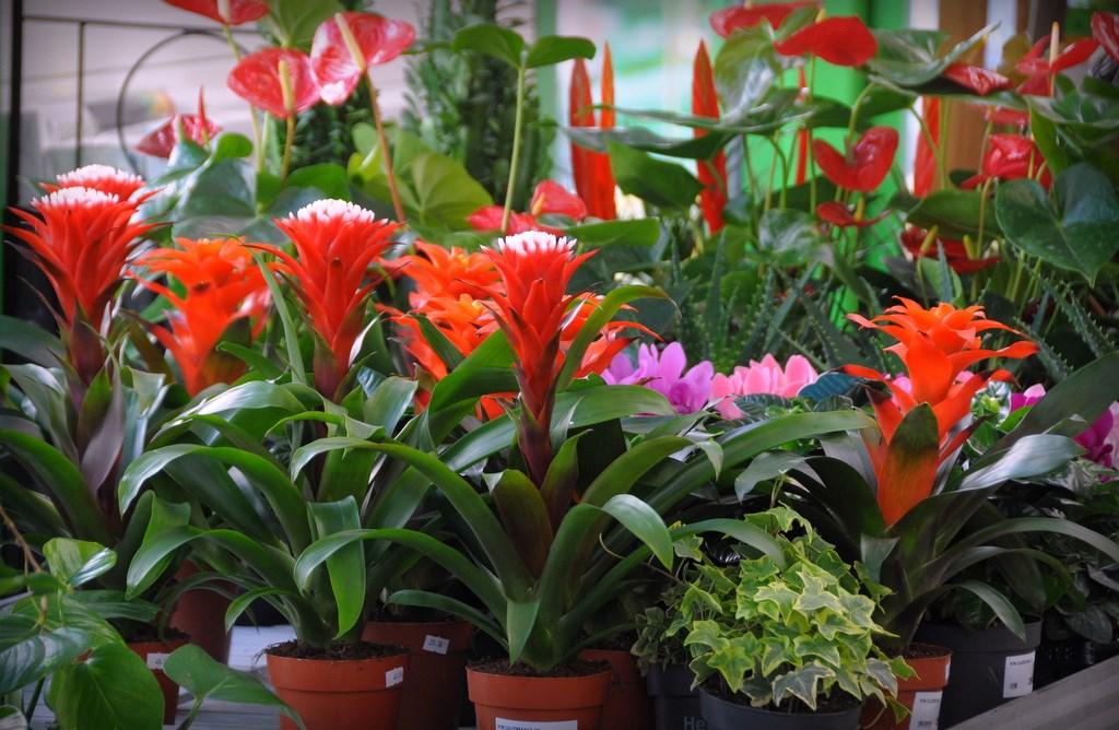 Kwiaty i rośliny pokojowe w przedwiosennej promocji