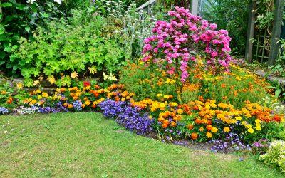 Byliny w naszych ogrodach