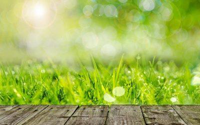 Zadbany, gęsty trawnik